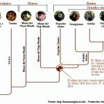 Esquema evolutivo